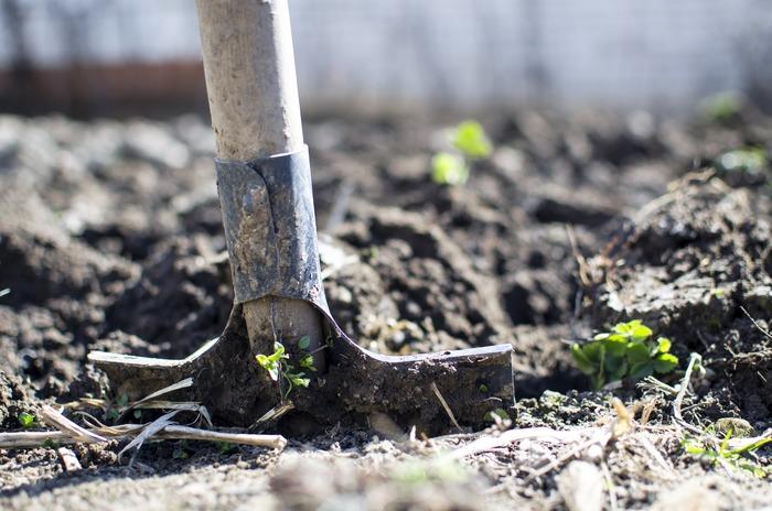 家庭菜園で自分で食べる野菜を自分で育てる生活、あこがれますよね。でも自宅には十分な庭がないからと、あきらめていませんか。そんな人も広い農園・菜園の一区画を借りれば、自分の好きな野菜を育てることができますよ。初心者でもスタッフにアドバイスもしてもらえたり、農具も借りることができたり、気軽に野菜づくりを始められます。利用者どうしのコミュニケーションもできるのは、シェアするからこその楽しさですよね。中には都会のどまんなかにある商業施設にある菜園も。