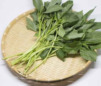 ちなみに、家庭菜園のモロヘイヤは、種やさやに毒性があるといわれますので食べないようにご注意を。スーパーなどで売られているモロヘイヤは、葉も茎も安心です。