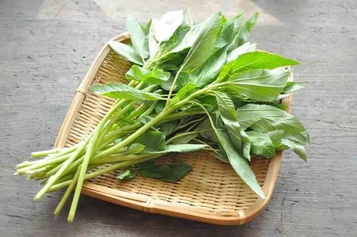 モロヘイヤは、やはりゆでて食べることが一番多いですね。上手な下処理方法は、まずさっと洗ったあと、茎に付いた葉を取ります。茎の穂先側半分も柔らかいので食べやすい大きさに切っておきましょう。そして、塩を入れた熱湯にまず茎を入れて、そのあと葉も加えてさっとゆで、冷水に取ります。なお、電子レンジに1分程度かけるのもいいようです。