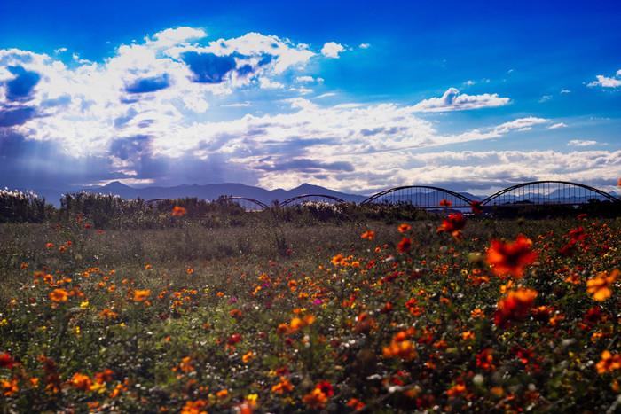 天気にめぐまれると、荒川コスモス街道から秩父連山を見渡すことができます。澄み渡った秋の青空、空に浮かぶ白い雲、一面のコスモス畑、秩父連山の美しい山容が調和した素晴らしい景色を眺めながら、ゆったりとした気分で秋のひとときを過ごしてみてはいかがでしょうか。