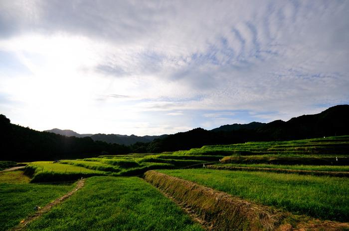 三重県亀山市に位置する坂本の棚田の歴史は古く戦国時代に開墾されたと言い伝えられています。緑豊かな斜面に、約440枚の水田が敷かれているのどかな風景は、訪れる人々の心を癒してくれる不思議な魅力を持っています。