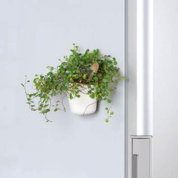 壁にかけるタイプのプラントポットは、壁紙との相性を考えてチョイスするといいですね。フラットなイメージの壁紙のときは、つるりとした表面のものが好相性。