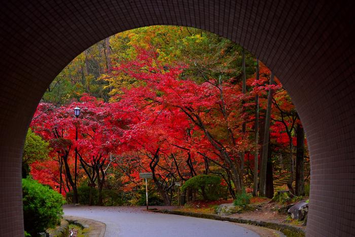 新潟県西蒲原郡にある「弥彦公園」。10月中旬から11月初旬にかけて、真っ赤に燃えるような、美しい紅葉を愉しめます。