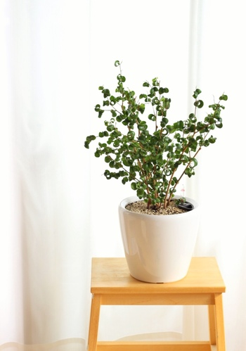 底面潅水で有名なレチューザのプラントポットは、大きめの植物を植えるのにもぴったり。小さな目盛りのついた試験管のようなガラス瓶が水の量を教えてくれます。