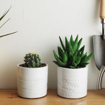 白地に彫刻模様のような連続模様が入ったやわらかな印象のプラントポットは、鉢穴のないタイプなので、鉢カバーとして使うか、多肉植物を植える植木鉢として使うといいですね。