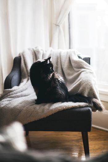 「おこもり感」を作るには、まずは椅子が一脚あればOKです。座布団やシートクッションでもかまいません。ここに座れば心安らげるのだと、内なる自分と約束するのです。座り心地のいいもの、ゆったりともたれられるもの、身をあずけられるようなものがいいですね。
