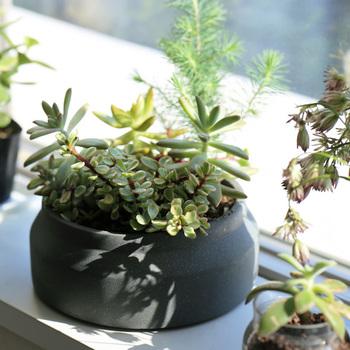 広めの口のプラントポットにたっぷり寄せ植えをすると小さな森のような空間が出来上がりました。緑の色の違いが可愛いですね。