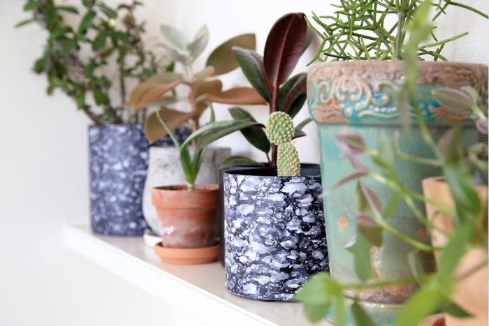 お部屋にフレッシュなグリーンがあると、活力に溢れるいきいきとした雰囲気を演出することができます。ほんのちいさなものでも、元気いっぱいのグリーンは私たちの疲れた心を癒してくれます。
