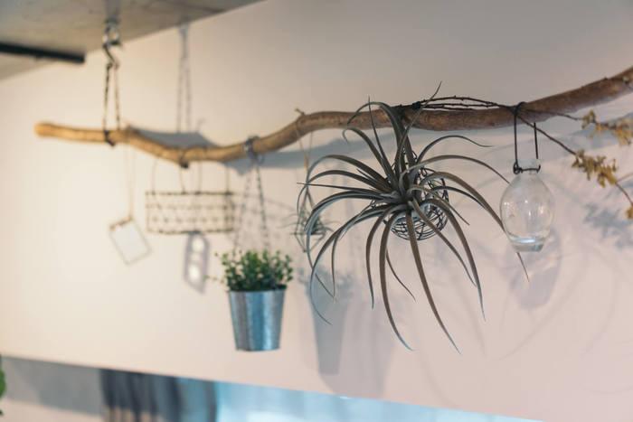 天井から吊るした流木に、さりげなく小さな植物たちが飾られています。瓶やワイヤーバスケットなどお気に入りの雑貨と組み合わせることで楽しい表情が生まれます!