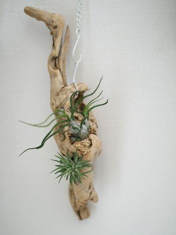 こちらのブロガーさんは、水苔とワイヤーを使い、2wayタイプの流木オブジェを作成。 置き型、壁掛け両方が楽しめるそうです!