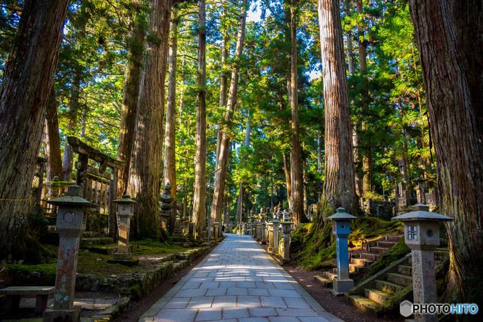 一の橋を渡り、奥の院へ入ると荘厳で静謐な雰囲気が漂っています。石畳の参道、樹齢数百年の杉の大木、無数の墓碑が、高野山の神秘的な雰囲気を引き立てています。
