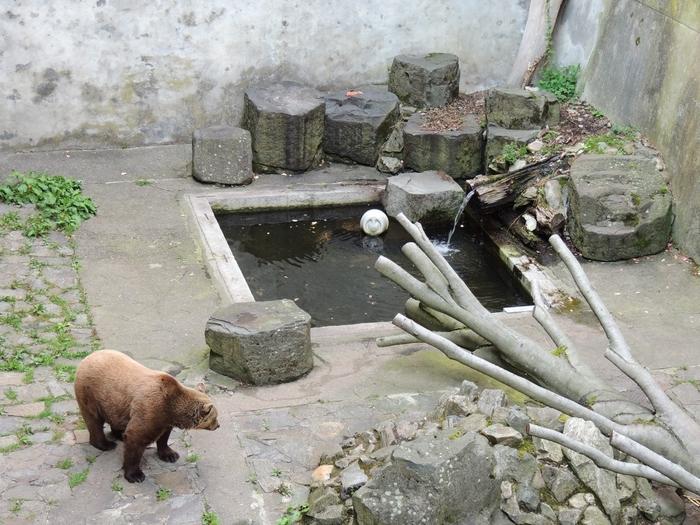 城の堀ではクマが訪れる人を迎えてくれます。いつ頃から、どのような目的でクマを飼育するようになったのか不明ですが、18世紀初頭の文献は、チェスキー・クルムロフ城でクマを飼育していたことを綴っています。