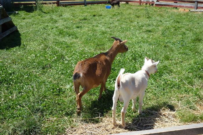 ちなみに、展望台のある「ファームズ千代田」は、ポニーやうさぎ、羊にラマなど、たくさんの動物達と触れ合える「ふれあい牧場」を併設しており、こちらも観光客に人気のスポットです。