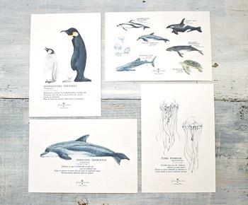 こちらは海の生き物を図鑑から切り取ったかのように丁寧に描いた絵はがき。英字の部分には、生き物の学名、科目、その生き物の説明などが記載されています。シンプルなデザインなので、色んな方に喜ばれそうな一枚です。