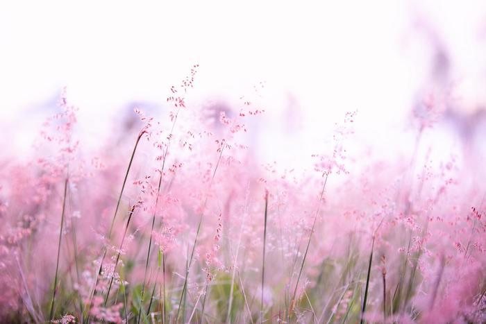 ヘアオイルは香りのバリエーションも豊富。お気に入りを見つければ、心地よい香りに包まれながら美しい髪をゲットできます♪
