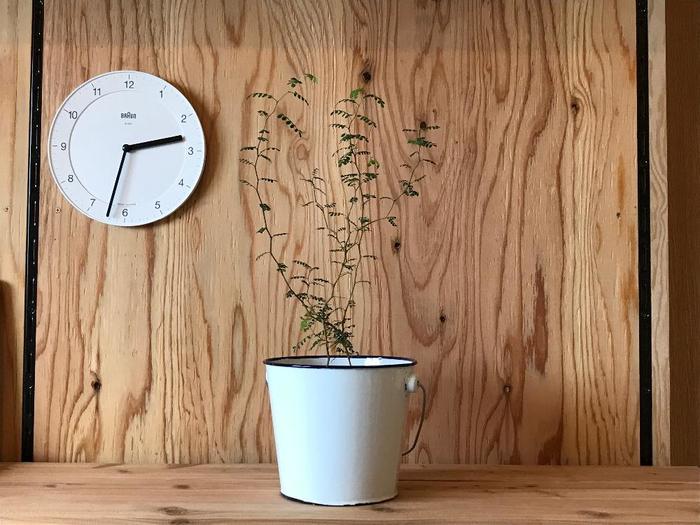 日常の中で目が届く場所にメルヘンの木を飾っておくと、元気がないときや新芽が出たときなど、変化にも気づきやすくなります。一日に何度も目をやる時計のそばなら、時間を確認するたびに植物も目に入って、癒やされそうですね。白い掛け時計にはホワイトの鉢を合わせて、ナチュラルですっきりした印象に。