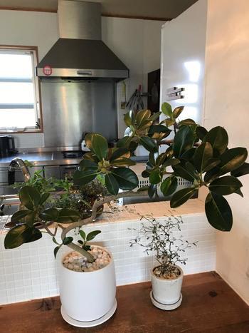キッチンカウンターのような場所にさりげなく植物が置いてあると、おしゃれな雰囲気になりますね。調理中や食事中、片付け中などにも、グリーンが目に入ると何だか癒やされます。小ぶりなメルヘンの木は、大きな植物と一緒に飾ってもかわいいです。