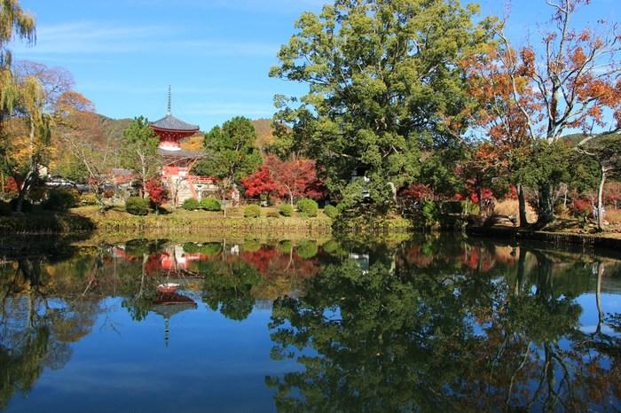 大覚寺は四季折々で美しい景色を見せてくれます。春は満開の桜、夏は深緑の樹々、秋は深紅の紅葉、冬は雪化粧となり、どの時季に大覚寺を訪れても風光明媚な景色を堪能することができます。