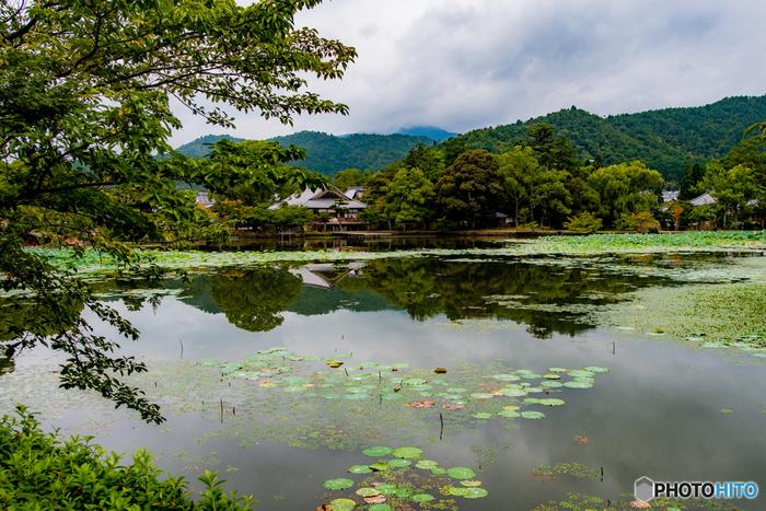 日本最古の庭池と伝えられている大沢池は、大覚寺を離宮として建立した嵯峨天皇が中国の洞庭湖を模して造らせた人造池です。