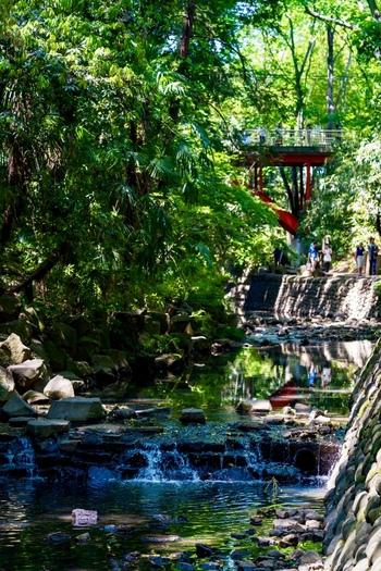 奥に見える赤い橋は「ゴルフ橋」。昭和初期に、このあたりに広大なゴルフ場があったことから呼ばれているそう。遊歩道は整備されていて歩きやすいので、思い立ったら気軽に足を運んでみませんか?