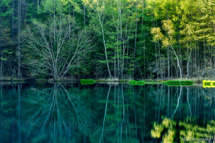神秘的で美しい湖面ですが、実は人工の池なんです。この地域は標高が1100mと高く、また水源が強い酸性のために作物が育ちにくい場所でした。それを改善するために、このため池を作って水を温め農業用水として使えるようにしました。