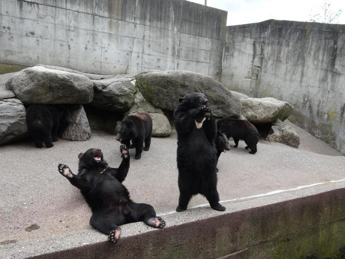 入場にはクマにあげるエサ代も含まれていて、柵越しに、エサをあげること出来ます。おねだりのポーズを見せてくれたり、寝そべったり…クマの自然な姿に、時間を忘れて見入ってしまいそうになります。1日2回、ショーもやっているので、ファミリーやカップルで、楽しいひと時を過ごしてみてはいかがでしょうか!