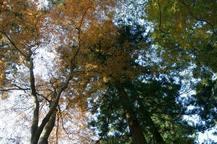 山頂を目指すときは、時々上を見上げてみましょう。天を覆うように生い茂る樹々の葉から射し込む木漏れ日を浴びる心地よさは格別です。