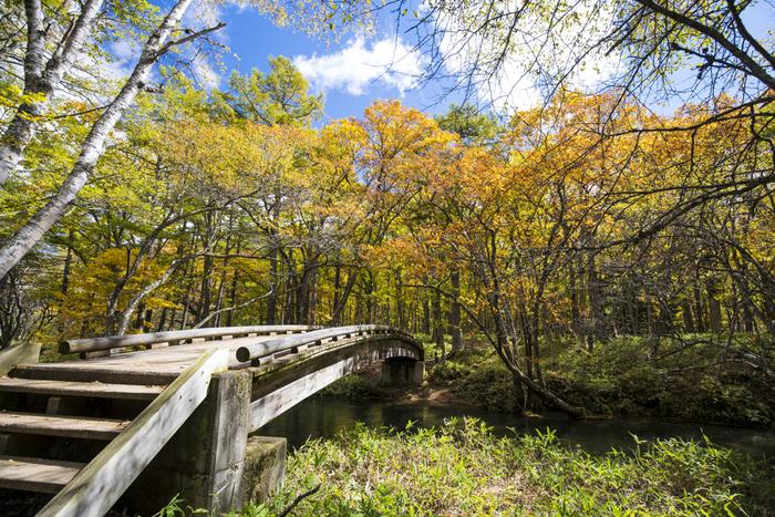 湿原の周囲には自然研究路が整備されています。そのため、約350種類にも及ぶ植物が自生している森林を気軽に散策することができます。