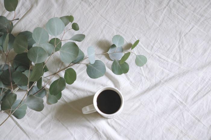 長持ち、という点から考えると、枝ものは優秀選手。一見扱いが難しそうに見えますが、とても持ちが良い上にお部屋に清涼感を与えてくれるので、夏場は特におすすめです。一本からでも雰囲気が出ますが、複数本生ける時は奇数にするとバランスが取りやすくなるそうです。画像はグレーがかった葉色が大人っぽいユーカリ。長い時期流通しているので手に入れやすい枝ものです。