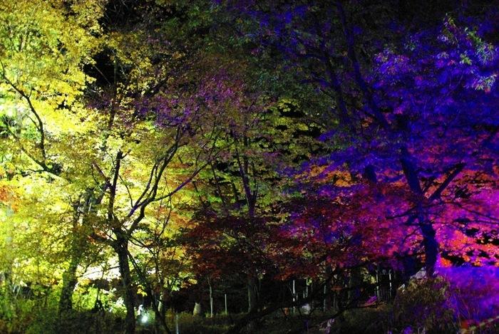 夜になると紅葉谷では樹々のライトアップが施されます。漆黒の世闇に、色とりどりの樹々が浮かびあがる様は幻想的で時間を忘れていつまでも眺めつづけていたくなります。