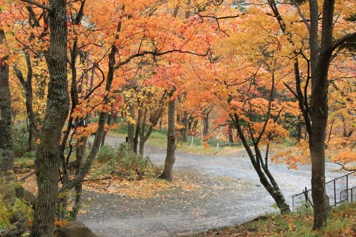 よく整備された遊歩道が続く紅葉谷は、層雲峡温泉から簡単にアクセスできる紅葉の名所です。