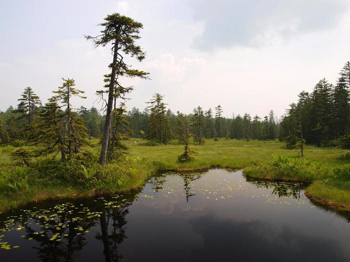 浮島湿原の散策路となっている木道からの眺める沼の美しさは格別です。静かな沼の水面が周囲の樹々と空を鏡のように映し出し、神秘的な雰囲気を醸し出しています。