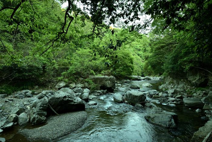 芥川の清流と周囲の山林が融和した風景が広がる摂津峡は、大阪府高槻市北部に位置しています。ここは、北大阪でも指折りの景勝地として知られています。