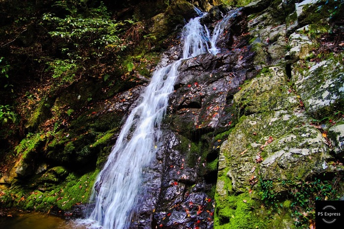 摂津峡の最北端には、落差15メートル、幅5メートルの白滝があります。真っ白なしぶきを散らしながら岩肌をなでるように滑り落ちる水流が周囲の森と見事に調和し、素晴らしい景観美をつくり出しています。