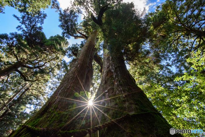 金剛山の山頂付近には葛木神社が鎮座しています。神社境内には巨大な夫婦杉があります。この巨木を見上げていると、一体どれほどの長い年月を寄り添い支え合い続けてきたのかと、想いを馳せずには居られなくなります。