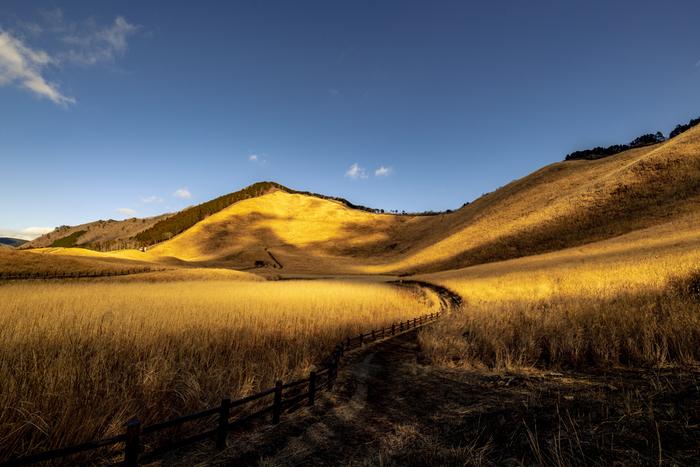 奈良県宇陀郡曽爾村に位置する曽爾高原は、標高1038メートルの倶留尊山と標高849メートルの亀山の麓から西側斜面に広がる高原です。約38ヘクタールの曽爾高原は、毎年秋になると「お亀池」と呼ばれる湿地帯を除いて一面のススキ野原となり、壮大な景色を見せてくれます。