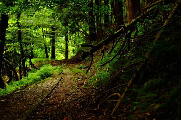 京都府南丹市を悠然と流れる由良川源流には手つかずの原生林、芦生の森が広がっています。芦生の森は、都市部に比較的近い低山地帯にもかかわらず、豊かな自然が残されています。由良川源流の水のめぐみを象徴するかのように、多くの動植物や昆虫たちがこの森に生息しています。