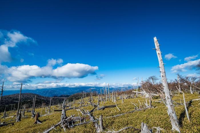 大台ケ原山にはたくさんの見どころがあります。豊かな渓谷となっているシオカラ谷、入山許可が必要となっている原生林が広がる西大台ケ原、大蛇の頭のような形をした奇岩・大蛇嵓など見どころは尽きません。その中でも、立ち枯れの樹々が無数に並ぶ正木峠は、まるで森の墓場のようで、訪れる人々に忘れることができない強烈な印象を与えます。