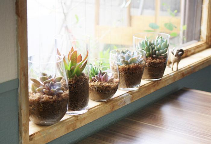 大きさや形の違うグラスやタンブラーを使った多肉植物のアレンジ。透明なガラスから土が見えることで、生き生きとした生命力を感じられます。窓際に並べたディスプレイは、日光が好きな多肉植物にぴったり。通気性や水はけに優れたセラミスや水苔を使うと根腐れしにくくなります◎また、水やりの時には蒸れないように、余分な水を出してあげることも大切です。(夏の直射日光は、多肉植物にも暑すぎる場合があるのでご注意を!)