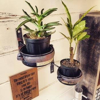 雨樋金具を塗装したものに空き缶をはめて、その上に多肉植物を飾っています。サビ加工した金具がクールでハンサムな雰囲気です。