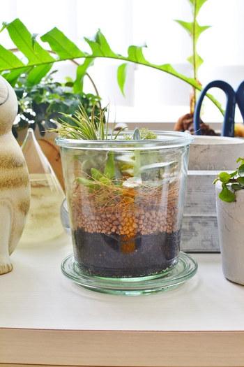 保存容器としてお馴染みの「WECK」を使ったアレンジで、多肉植物×エアープランツの寄せ植えです。本来の用途にとらわれず、他の植物と組み合わせたり自由な発想で楽しみましょう。