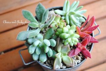 インテリアグリーンの人気者♪「多肉植物」のおしゃれな飾り方&DIYアイデア集