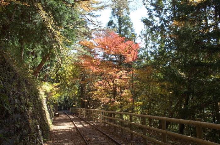井川湖遊歩道とは、井川ダムによってできた人造湖・井川湖の畔を散策できる遊歩道です。ここは、鉄道の廃線跡を利用して敷かれた遊歩道となっているので、ノスタルジックな気分に浸りながらハイキングを楽しむことができます。