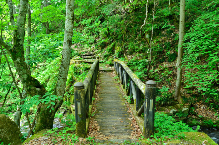 岐阜県高山市の飛騨清見地区にある「おおくら滝遊歩道」は、飛騨せせらぎ街道から、景勝地・大倉滝までを結ぶハイキングコースです。