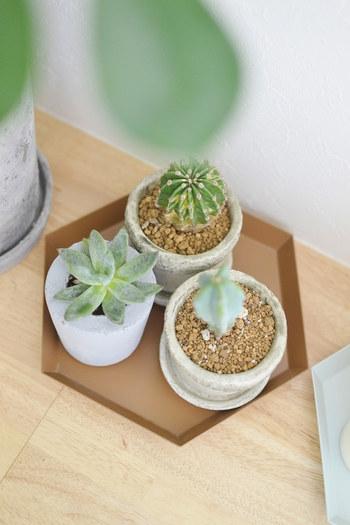 多肉植物を陶器の植木鉢に入れた基本のアレンジは、水やりがしやすいのがメリット。さらにプラスαで楽しんでみましょう。シンプルな鉢植えも、こんな風にサボテンと一緒に六角形のトレーにまとめることで、さり気なく変化が生まれます。