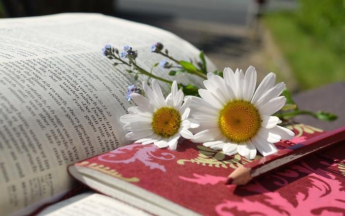 白い可憐なお花がたくさん咲くデイジー。和名はヒナギクでキクの仲間のお花です。デイジー全般の花言葉は「平和」「希望」と前向きなイメージ。また、最もポピュラーな白いデイジーには「無邪気」という花言葉もあります。お花の見た目にぴったりの花言葉で、相手にも分かってもらいやすいので、ギフトとしても贈りやすいお花です。
