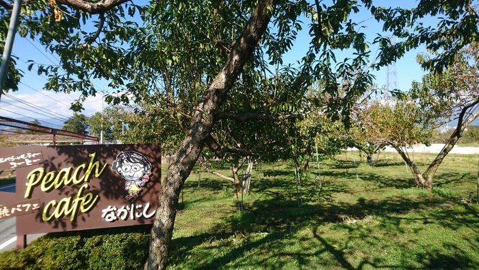 70年の歴史を持つ桃農家「中西農園」。 カフェは1年を通しての営業。朝採りの桃を使う〈夏メニュー〉、桃のコンポートなど加工品を使う〈冬メニュー〉があります。