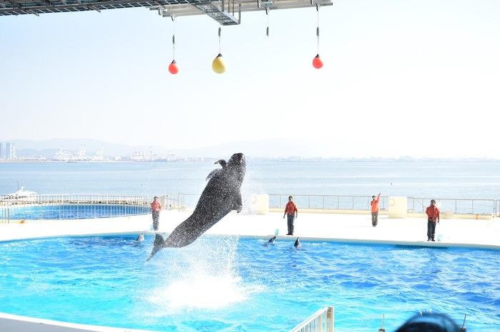 博多湾をバックにして行なわれる「イルカ・アシカショー」は大人気!飼育員さんとの息の合ったパフォーマンスは見応え満点です◎