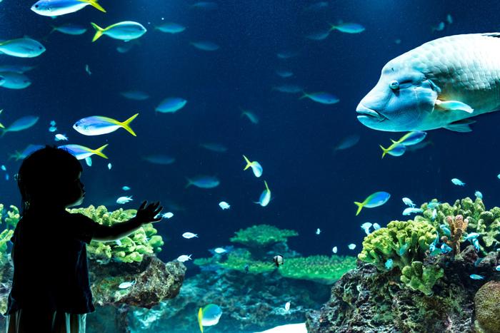 その他にも、「かいじゅうアイランド」「ラッコプール」「奄美のサンゴ礁」「阿蘇 水の森」「九州の近海」など見所が満載!時間の許す限り、のんびりと眺めていたいですね♪