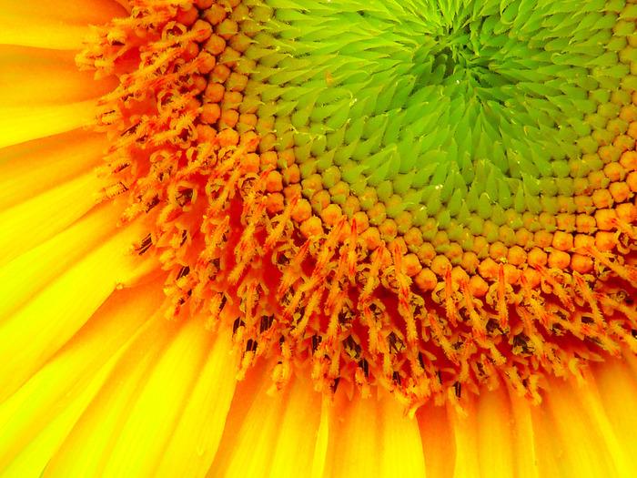 マクロ撮影ができるカメラを持っていたら、お花にグッと寄って撮影してみましょう。普段目で見ている中では気づけない発見もありそうです。